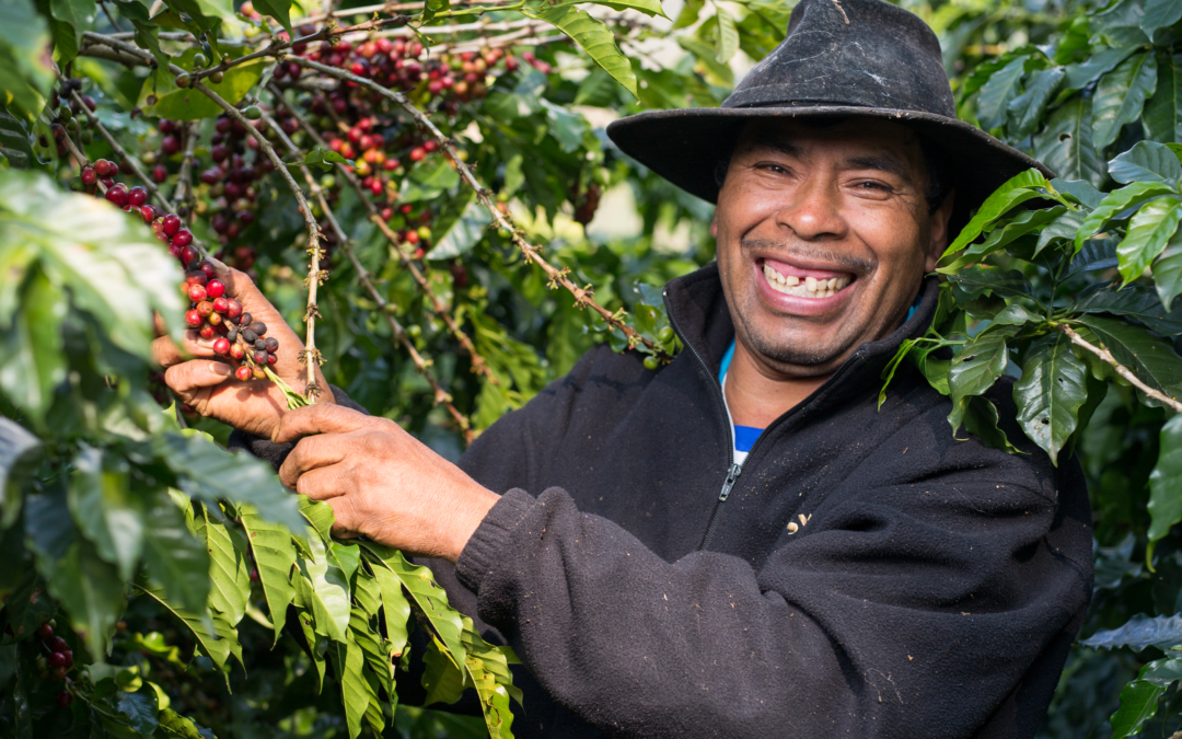A coffee education: Olam partners with TechnoServe to upskill Guatemala's coffee farmers